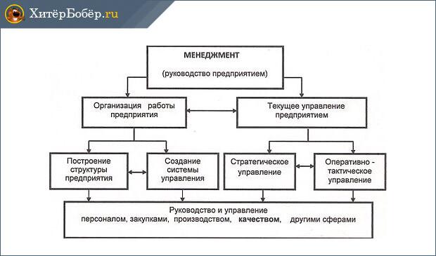 Структура менеджмента производственной компании