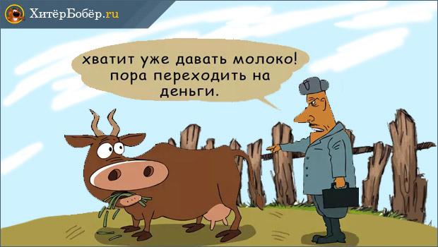 Изображение - Как в селе заработать денег Korova-daet-dengi